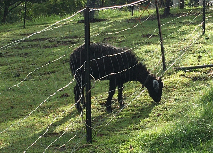 """""""The grass is greener,"""" said the goat."""