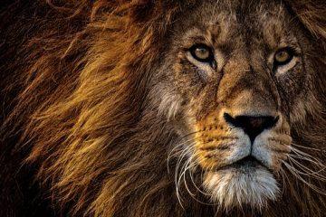The Great Roar!