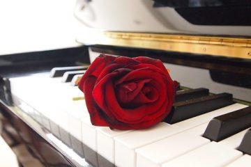 Sonata No. 48 and the symphony of life